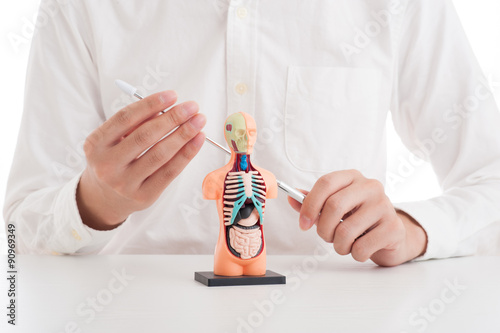 Fotografie, Obraz  人体模型で説明している男性