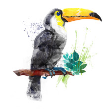 Vector Watercolor Toucan