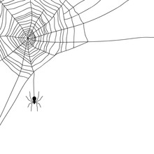 Spider And Web Isolated On White, Vector