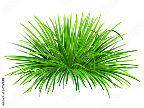 Obraz na plátne Bunch of green grass. Vector, isolated on white background.