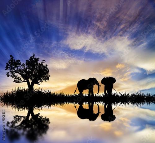 elefantes en el lago