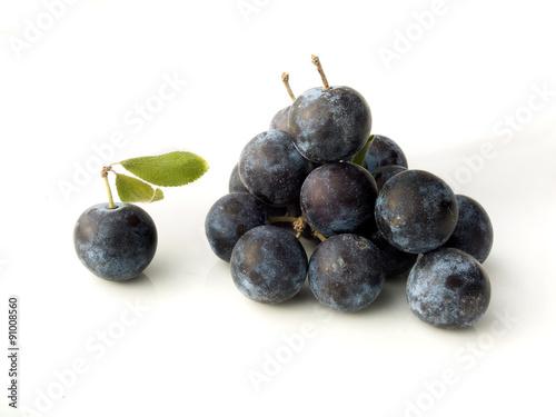 Valokuva  Sloe,Prunus spinosa - blackthorn on a white background