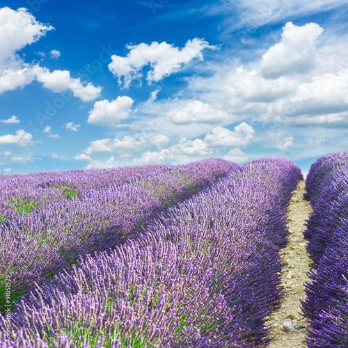 Foto op Canvas Lavendel Lavender field