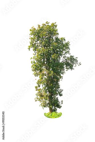 Fotografia, Obraz  deciduous tree