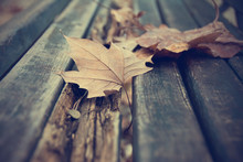 Dead Leaves On Bench