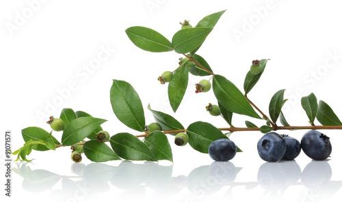 Fototapeta Blueberries obraz