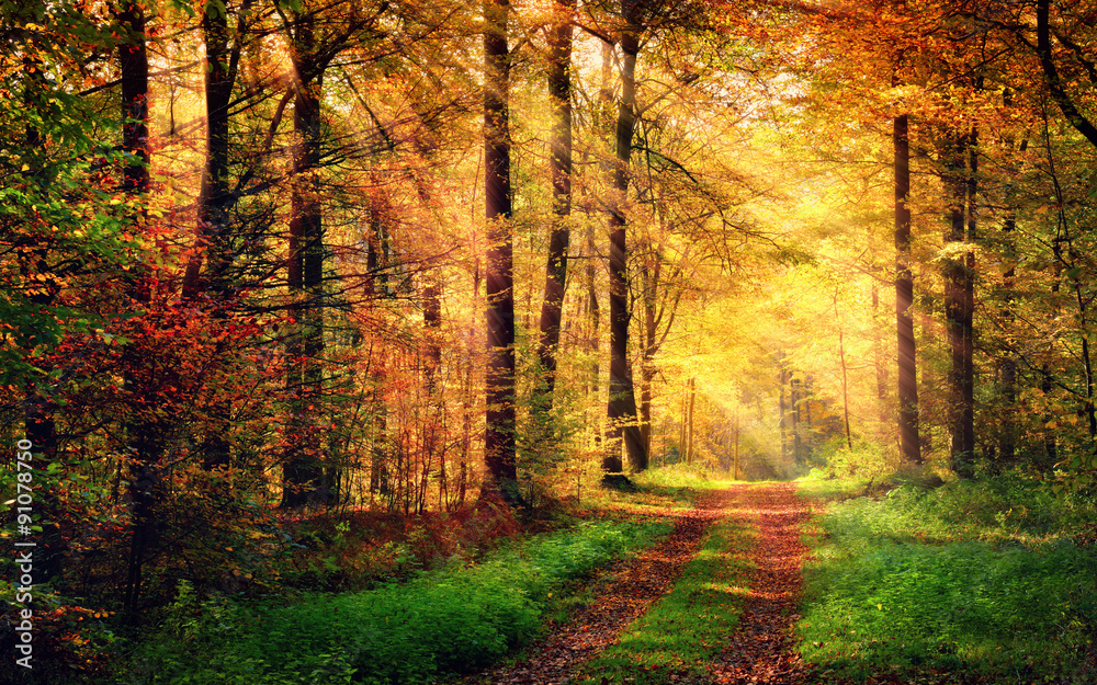 Fototapeta Autumn forest scenery with rays of warm light