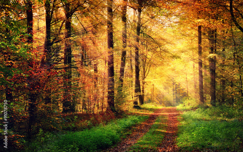 Poster Miel Autumn forest scenery with rays of warm light