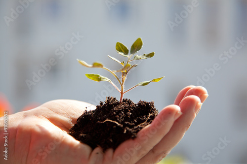 Garden Poster Plant woman holding little plant with soil in her hand