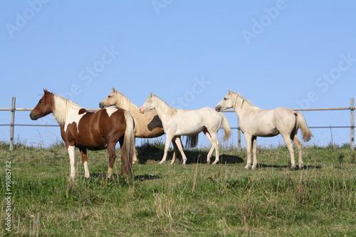 Fotografie, Obraz  Troupeau de chevaux aux aguets
