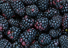 Blackberries Background, Fresh...