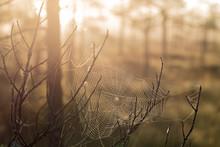 Spiderweb Between Two Branch
