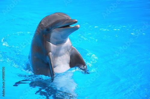 Staande foto Dolfijn Śmiejący się delfin w Loro Park na Teneryfie