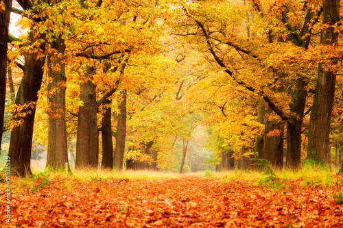 Poster de jardin Automne Beautiful autumn forest in national park 'De hoge Veluwe' in the Netherlands