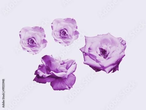 Fleurs Dessin Couleur Violette Buy This Stock