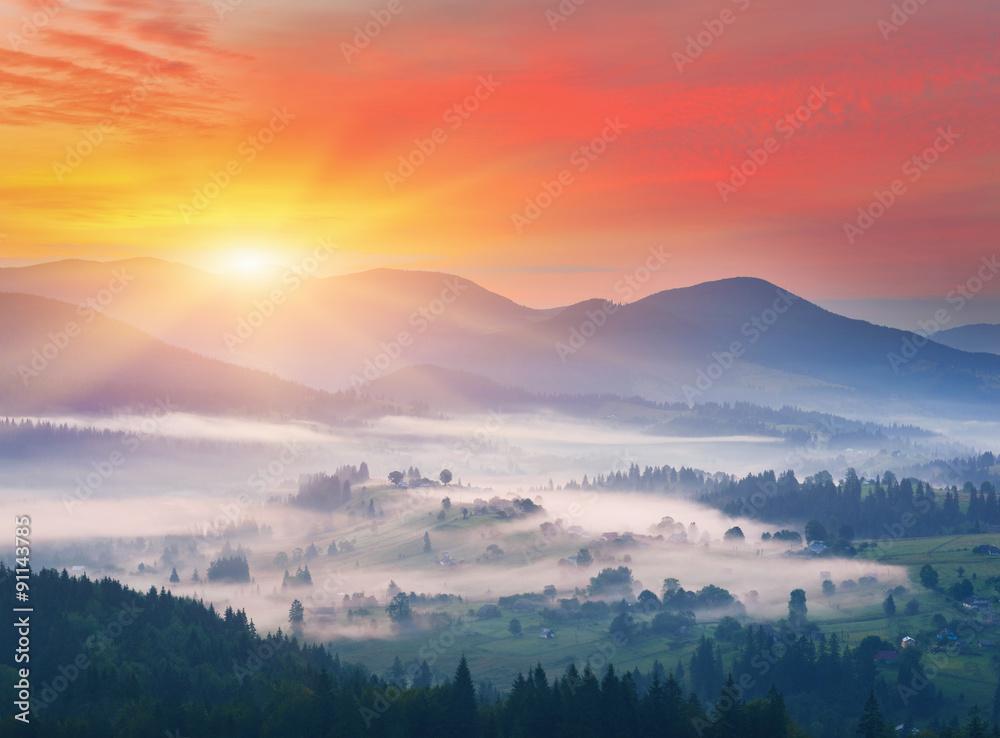Fototapety, obrazy: Misty morning