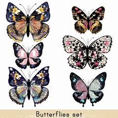 Set of vector realistic colorful butterflies for design