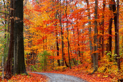 Poster de jardin Automne Scenic trail between autumn trees