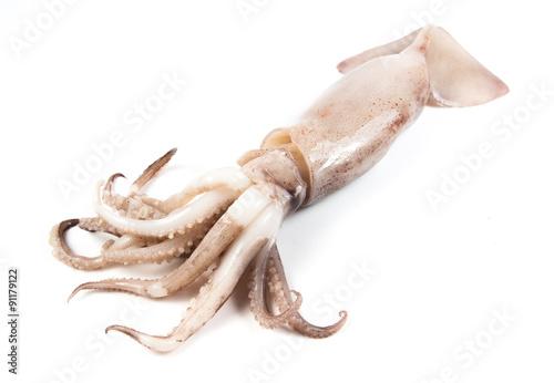 freshly caught squid on white background