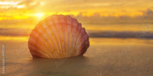 Fotografering  Beautiful beach with sunrise background. Focus on sea shell.