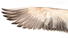 Duck Wings On A White Background