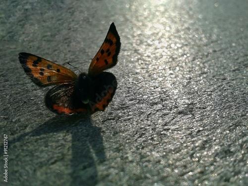 Foto op Plexiglas Stenen in het Zand Терракотовая бабочка на серебристом камне