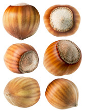 Collection Of Hazelnuts Isolated On The White Background