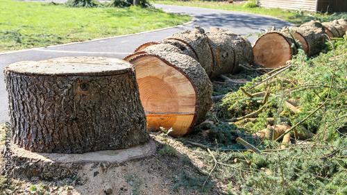 arbre débité