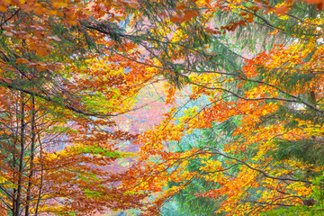 FototapetaColorful Autumn Leaves - beautiful sesonal horizontal