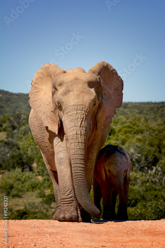 Foto op Plexiglas Zuid Afrika Mother and child elephants, Addo Elephant national park, South Africa