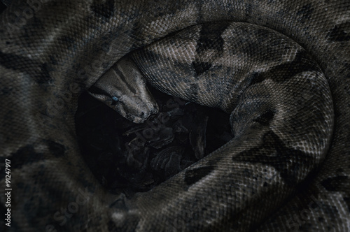 A snake sitting on black rocks