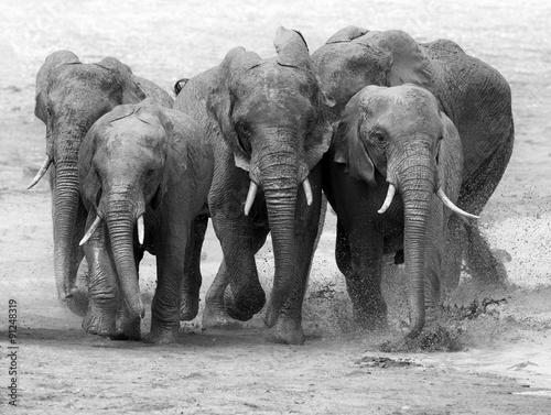 Fototapeta Elephant obraz na płótnie