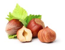 Forest Nuts Hazelnuts