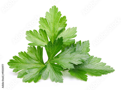 Fotografie, Tablou  Parsley herb isolated