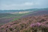 The purple haze - 91315379