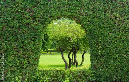 Fotografie, Tablou  tree window