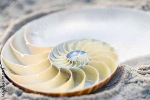 Fotografía  Nautilus seccionada