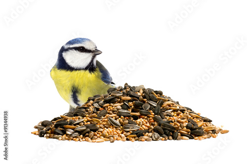 Fotografía  Blue tit and a pile of mixed bird seeds on white background