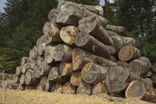 Photo sur Aluminium Nature houtstapel driekhoek