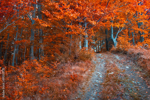Colorful autumn morning in the dark mountain forest.