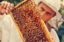 Beekeeper Collecting Honey