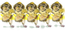 Illustration Of Dancing Mice With Straw Hats In A Chorus Line