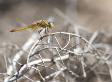 Dragonfly On Nature