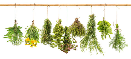 Fototapeta Przyprawy Fresh herbs dill, basil, rosemary, thyme, oregano, marjoram, dan