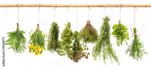 koper-ze-swiezych-ziol-bazylia-rozmaryn-tymianek-oregano-majeranek-dan