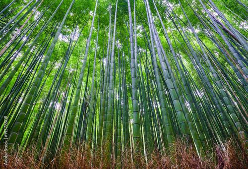 las-bambusowy-arashiyama-kioto-japonia
