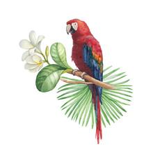 Watercolor Illustration Of Tro...