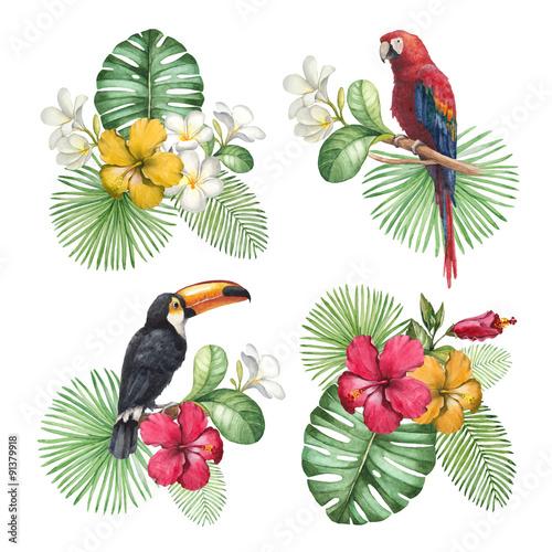 egzotyczne-ptaki-i-rosliny-na-bialym-tle