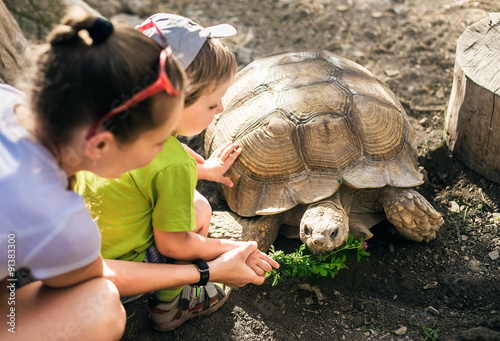 Poster Tortue Large sand turtle and boy