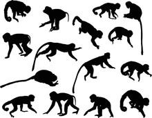 Fifteen Black Isolated Monkey ...